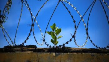 freedom_prison_jail_jailed_prison_break_wire-666264.jpg%2521s.jpeg